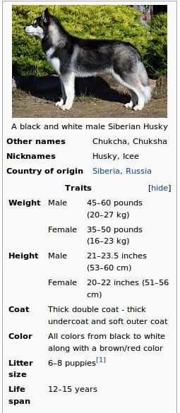 Siberian Huskies Appearance Siberianhuskies